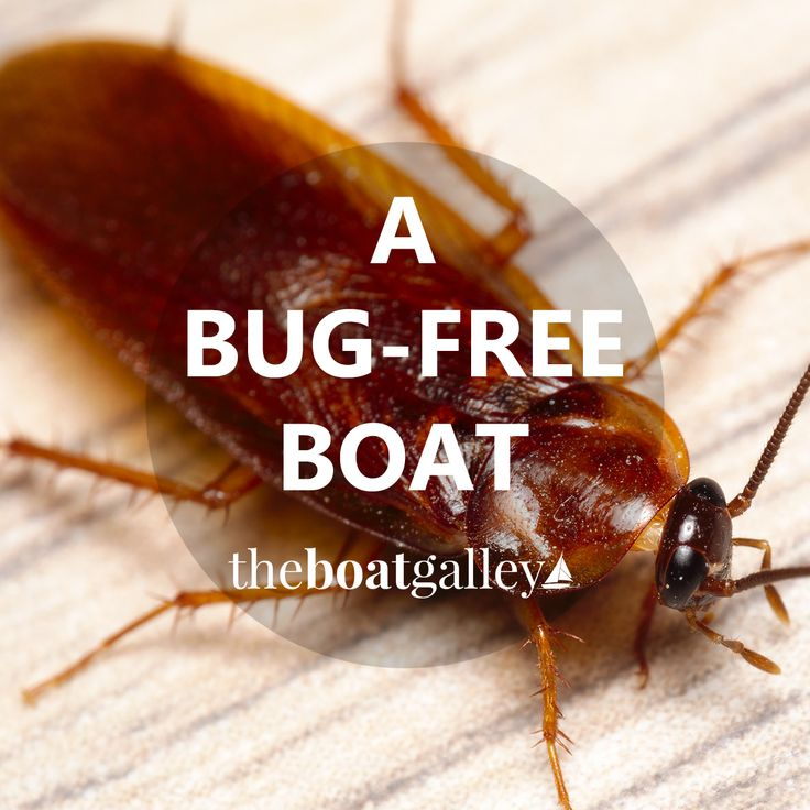 Bugs and other critters just love boats! Avoid infestations and bites with these tips.