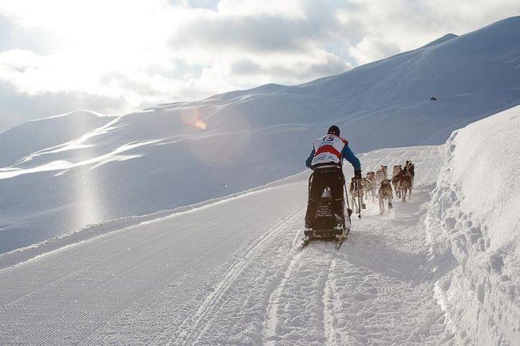 Du 11 au 22 janvier 2014 ce sera l'occasion de fêter les 10 ans de La Grande Odyssée Savoie Mont Blanc .10 ans d' aventure , d' émotions partagées, demoments sportifsextraordinaires......