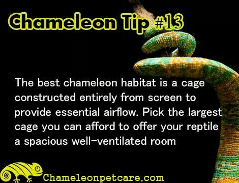 Get the best Help and #Tips to care for your #chameleon . Join us on the website! #cage #light #airing #reptile