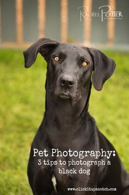 pet photography - how to photograph a black dog She also provides info about photographing pets in  general