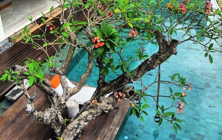 #tigadisVilla #BaliWeddingVilla #BaliHomeWedding #LombokWeddingPlanner http://balihomevilla.com/jimbaran-…/tigadis-villas-jimbaran/