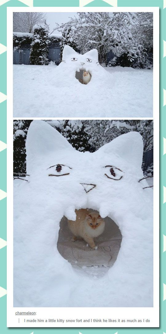 Kitty Snow Fort: Cats Humor, Cats Cats, Kitty Cats, Snow Fort, Funny Cats, Kitty Snow, Crazy Cat, Cat Lady, Cat Memes