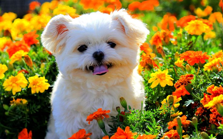 ... Backgrounds Big smile! npic spring fling contest! pinterest cute