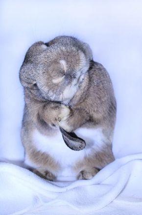 haustier-view-hase-lustige-tiere-kaninchen-putzen-haustierfotografie-940.jpg (59… –  #haust…