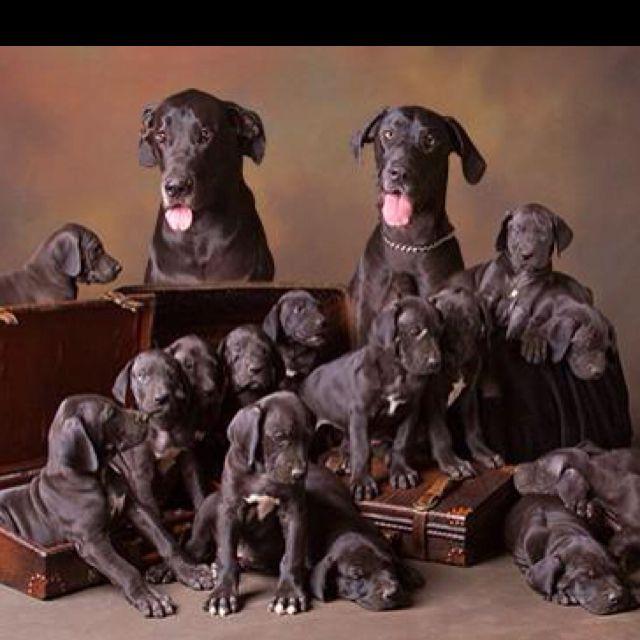 Danes family portrait.