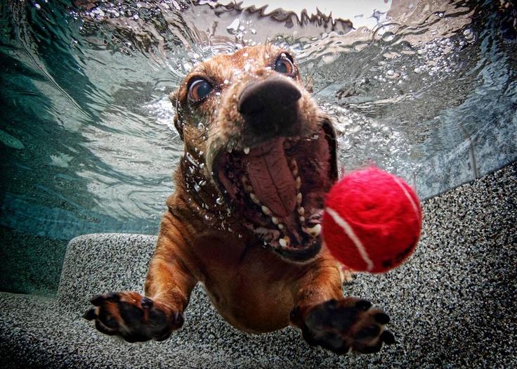 el perro de un colega