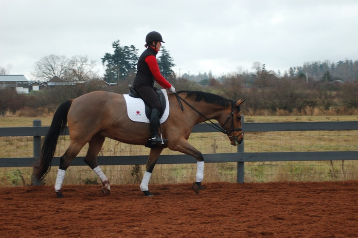 """Riding """"long and low"""" allows your horse to stretch through his back and neck, relaxing tight muscles and releasing mental tension. But how does a rider encourage their horse to go """"long and low""""? Visit www.horsejournals.com/horsewise-learning-long-and-low to read more. Photo: Darlene Brain."""