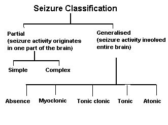 Types of Seizure-Epilepsy Awareness Program-Middle East Medical Information Center and Directory
