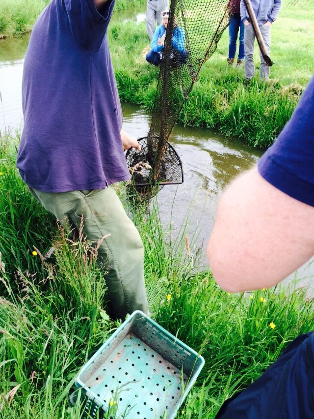 Taking out the fyke out of the polder