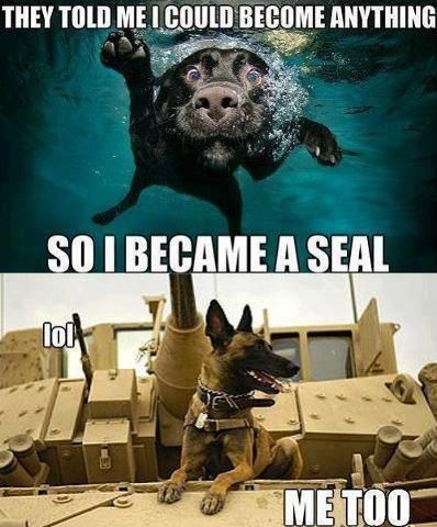 Nothing BEATS having a good SPECOPS DOG around during RECON & FLANK BLACKOPS. Always faithful, they have your back and act like your LIVE RADAR -- detecting land mines, chemicals, bombs, etc.