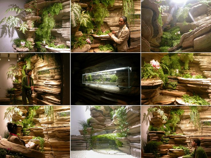 9 best sacha inchi images on pinterest seeds photos of for Mur vegetal interieur
