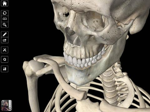 Essential Skeleton 2 - truly amazing details in this app. Zoom in and navigate around this skeleton, capture images to your camera roll and more.