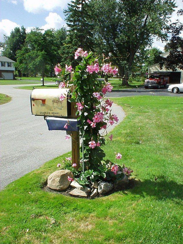 mailbox plantings gardening