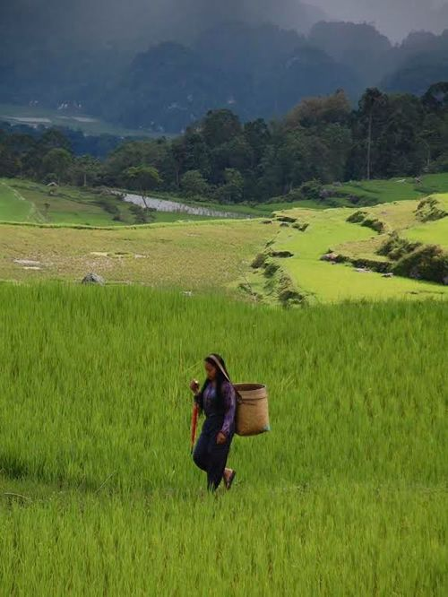 Rice fields on Toraja from Cultural Travel in Tana Toraja, Sulawesi, Indonesia