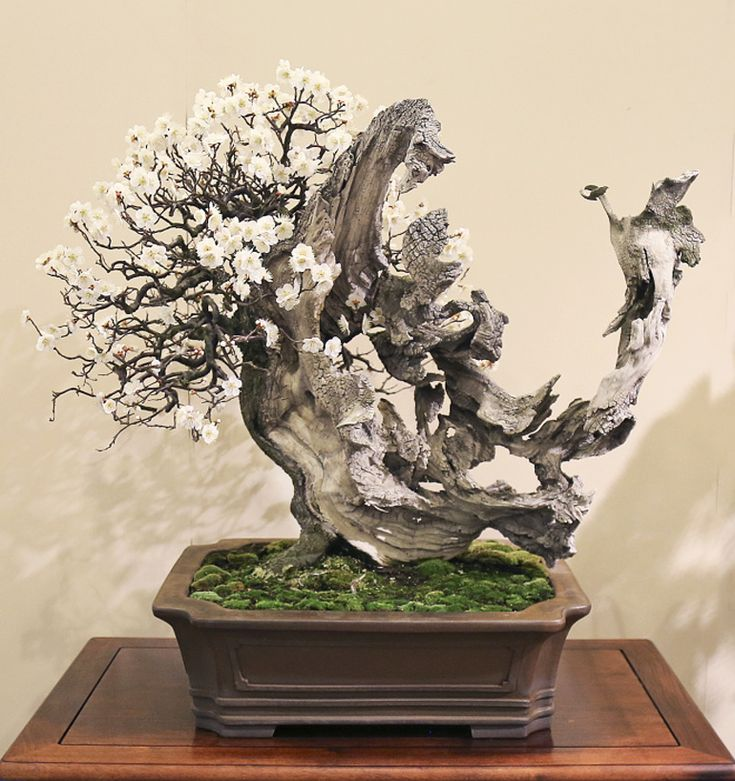 17 best images about bonss on pinterest trees bonsai for Most expensive bonsai tree ever