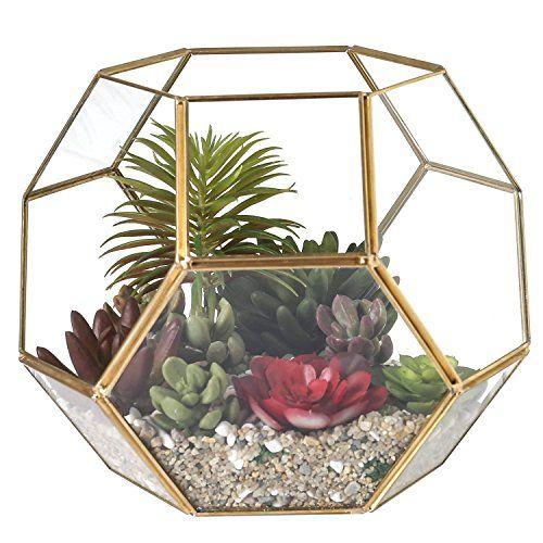 8 Inch Hexagon Brass Framed Glass Plant Terrarium with Fr... https://www.amazon.com/dp/B06XPPY6WC/ref=cm_sw_r_pi_dp_U_x_9BioAb9NNFA6E