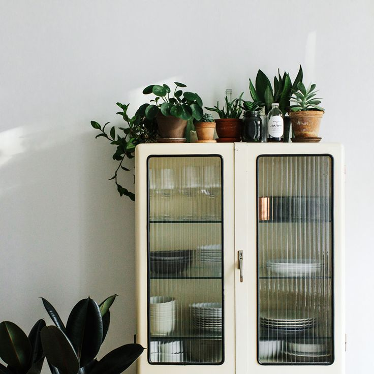 old medicine cabinet with succulents