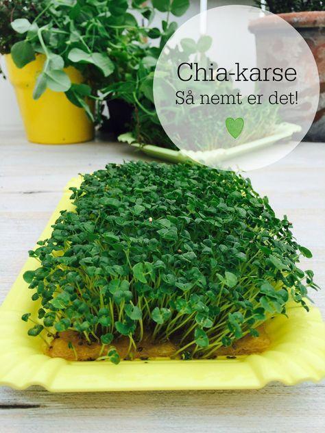 Her kommer bare lige en lille frisk idé til noget, du kan gro hjemme i din vindueskarm. Nemlig chia-karse. Og det er mega-nemt. Følg den nemme vejledning her: