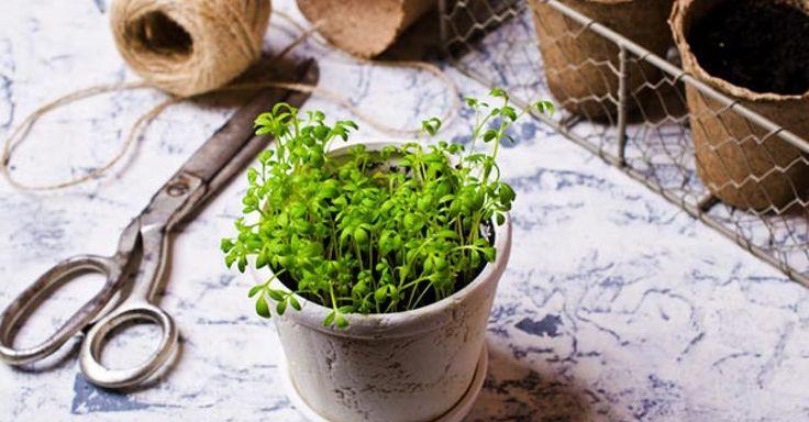 6 proteinreiche Gemüsesorten: Diese Gemüsesorten haben besonders viel pflanzliches Eiweiß. | eatsmarter.de