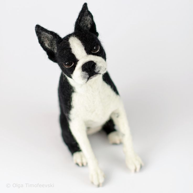 Sitting Boston terrier, needle felted sculpture