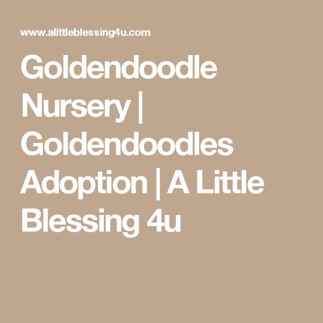 Goldendoodle Nursery   Goldendoodles Adoption   A Little Blessing 4u