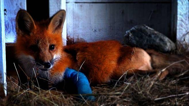 ROZHOVOR: O naději pro divoká zvířata a o tom, jak jich zachránit co nejvíc