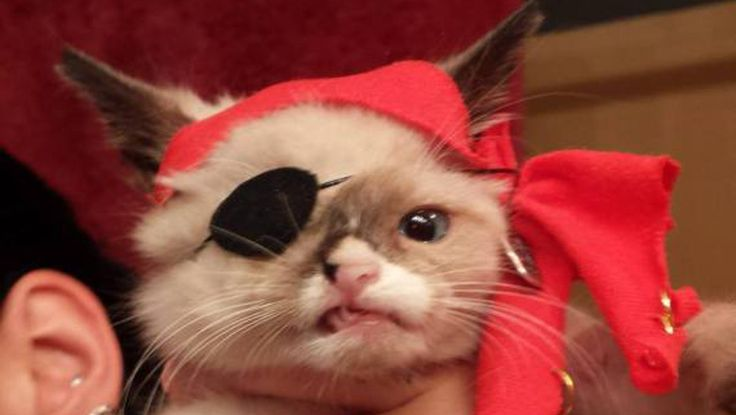 This adorable one-eyed cat was rescued in September. He had severe injuries and many diseases when Blazer Schaffer found her. In order to raise money to save the poor kitten, Schaffer dressed up the cat as a pirate and the rest is history! See his story now: http://videos.komando.com/watch/4102/viral-videos-meet-sir-stuffingtonAnimal Pics, Favorite Oneey, Funny Pics, Pirates Cat, Sir Stuffington, Funny Animal, Grumpy Cat, Pirates Kittens, Adorable Animal