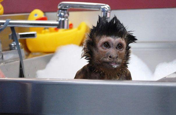 Cute Monkey Taking A Bath