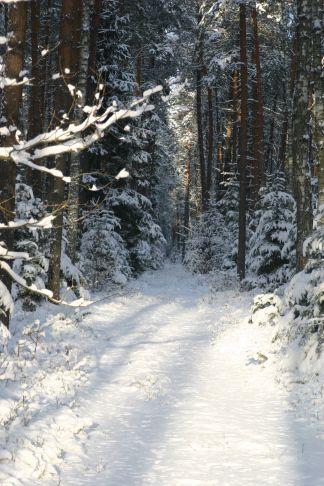 #winter #poland