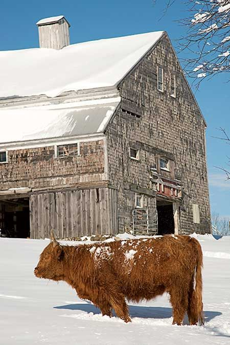Classic Barns of Maine