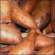 G6368 Growing Sweet Potatoes in Missouri | University of Missouri Extension