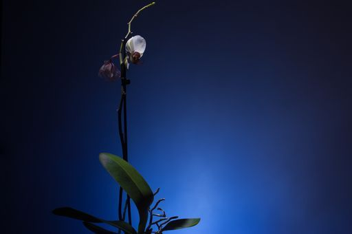 """Check out my art piece """"Orchid and Leaves on blue background"""" on crated.com"""
