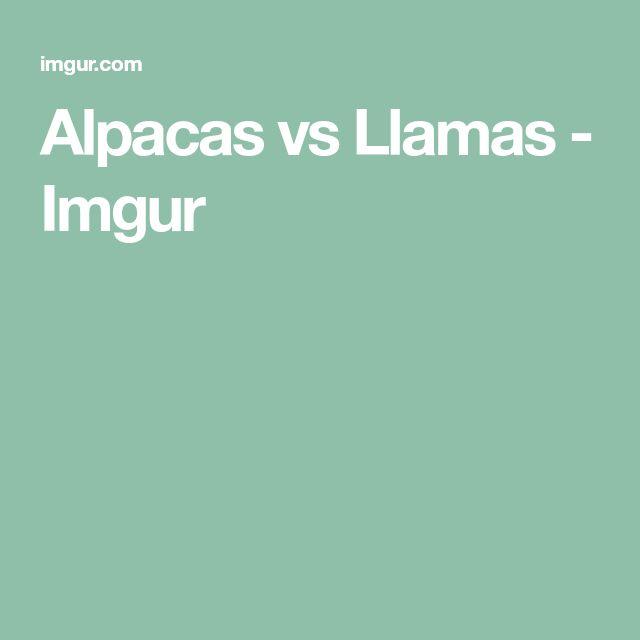 Alpacas vs Llamas - Imgur