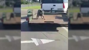 Video of dog tied to moving trailer sparks outrage, debate online - Blooper News - News by you for you!™