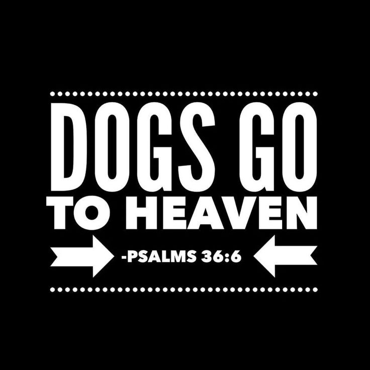 Dog's go to Heaven to.