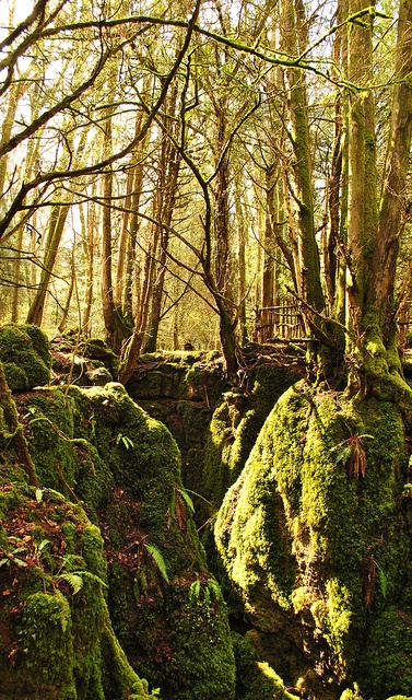 Puzzlewood, Forest of Dean, England by heather.samuel, via Flickr