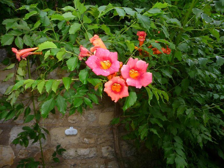 Foto tomada en el jardín. Admirar la naturaleza y sentirla, eso me gusta. http://dulcebimlatino.blogspot.com