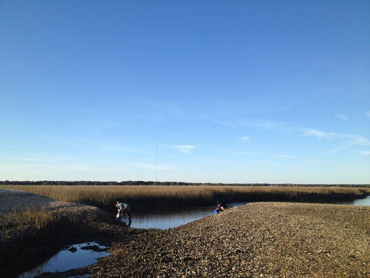 Clamming in South Carolina marsh.
