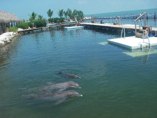 Dolphin Research Center (Grassy Key, Florida)