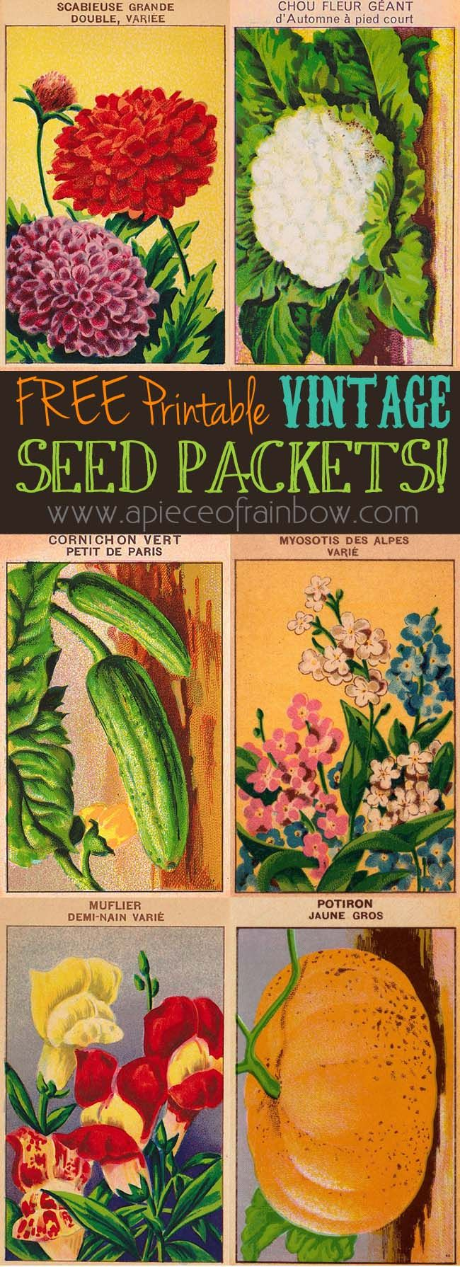 Free printable vintage French seed packets of vegetables and flowers ! Take some scrap wood, and make beautiful wall hanging art / decor out of them!