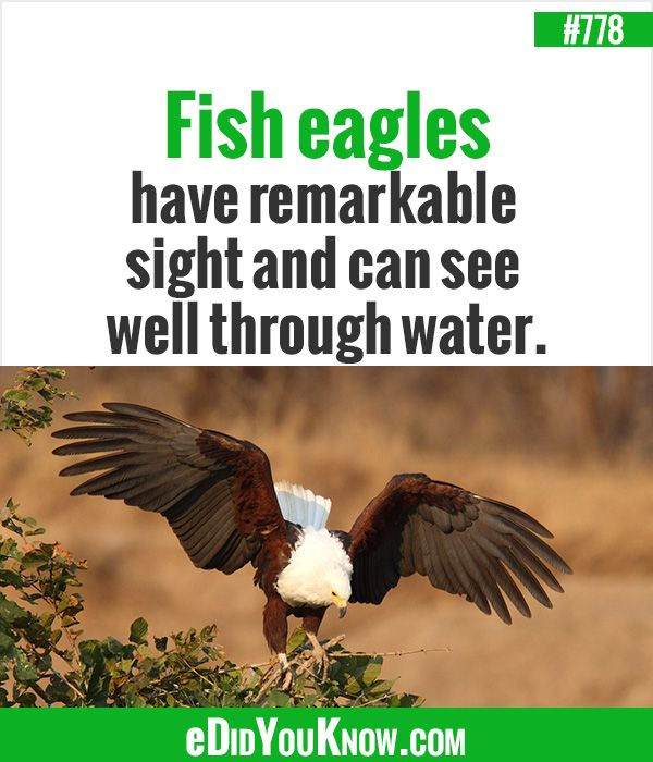627 best animals images on pinterest random facts for Can fish see water