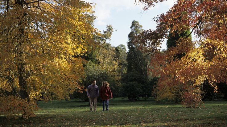 Enjoy glorious autumn colour on a National Trust walking trail through woodland and meadows at Speke Hall, Liverpool