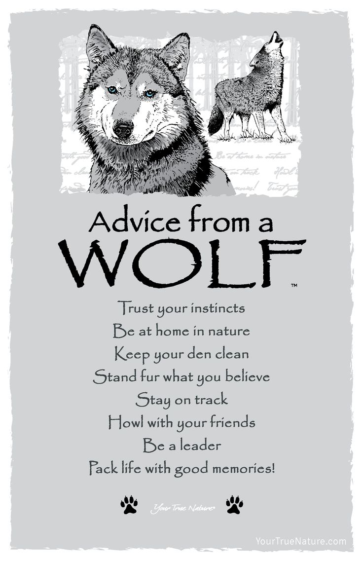 Journey Advice from a Wolf: