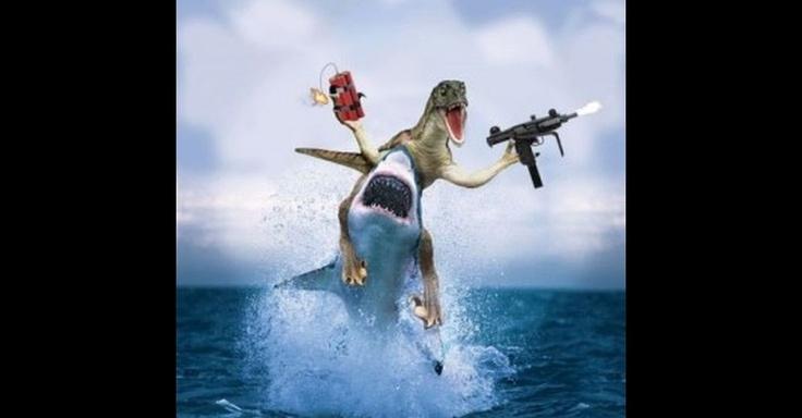 Shark Attack   Shark attack: modinha na web brinca com ataque de tubarão e coloca ...