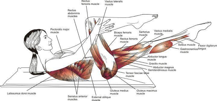 TRABALHANDO COM PILATES: Anatomia do Pilates