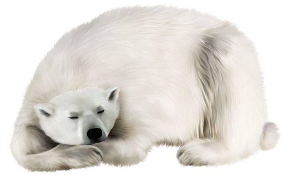 White Bear PNG Transparent Clip Art Image