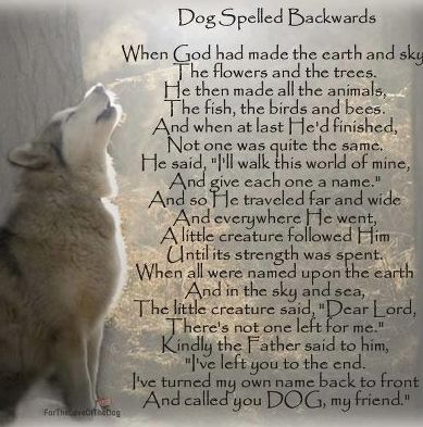 Beautiful poem about dogs!  I just love this ;) for you Buddy!