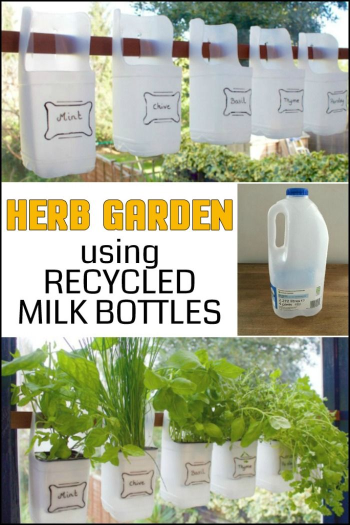 Turn Empty Plastic Milk Bottles into a Herb Garden!