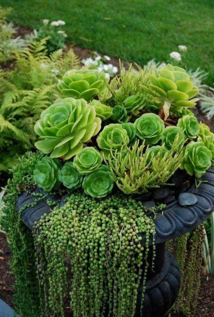 passione piante grasse