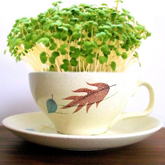 DIY Microgreens Garden Kit in Midcentury Franciscan Autumn Leaves Pattern Tea Cup & Saucer - Vintage China Planter on Etsy, $14.00